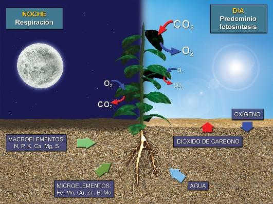 fotosintesis y sus partes: