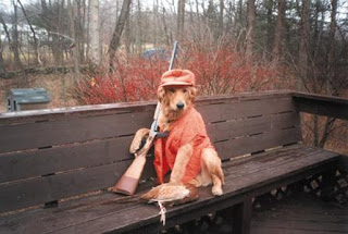 hunting dog with a gun