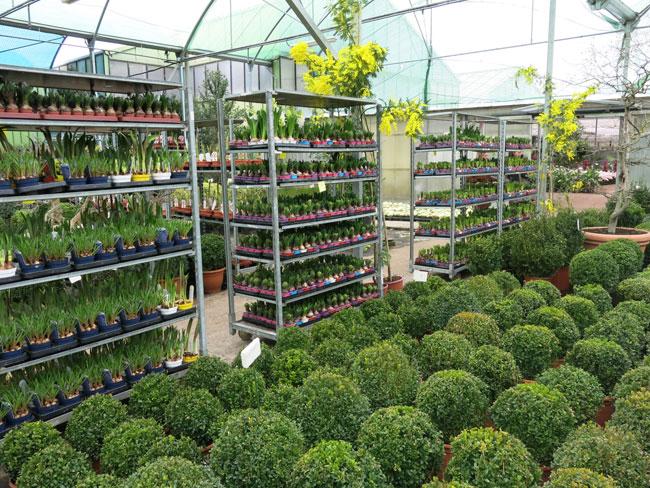 Paisaje libre visita a viveros shangai en madrid for Plantas precios viveros