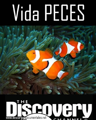 documental vida peces discovery channel