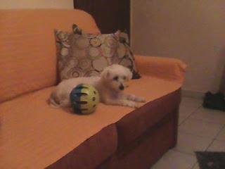 Δίνεται για υιοθεσία σκυλίτσα, μαλτεζ 2 ετών. Είναι υγιέστατη, πολύ φιλική με όλους τους ανθρώπους και ήσυχη και παιχνιδιάρα με τα άλλα σκυλιά