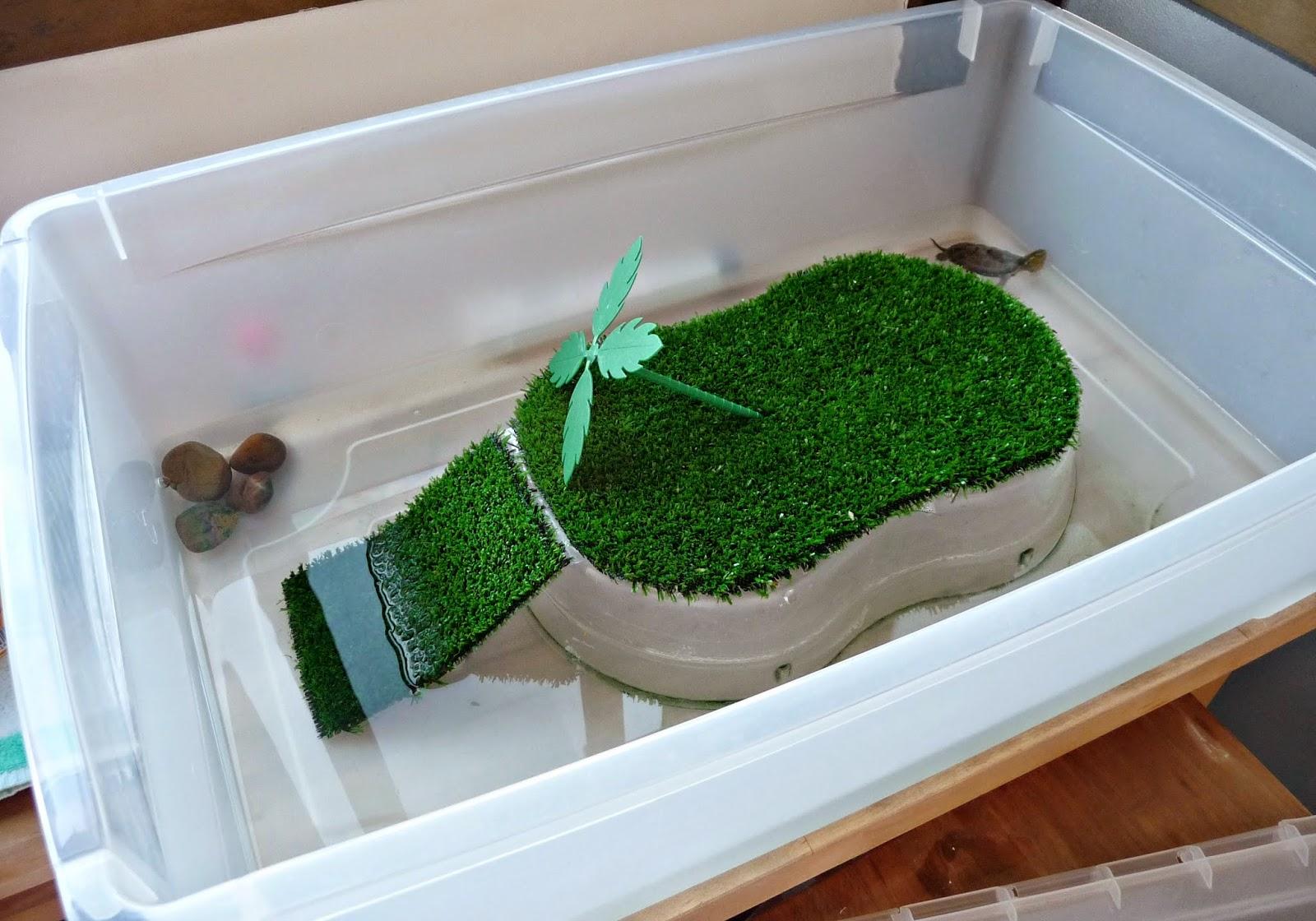 Envuelta en crema diy fabrica un tortuguero de forma for Imagenes de estanques caseros