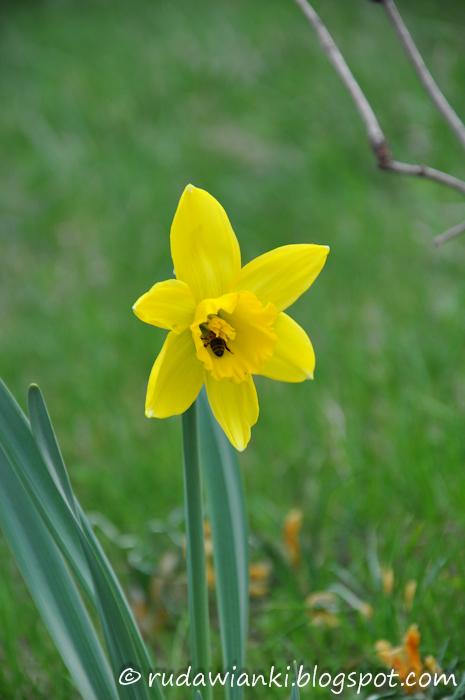Już wiosna podrosła.