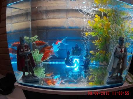 il mio acquario
