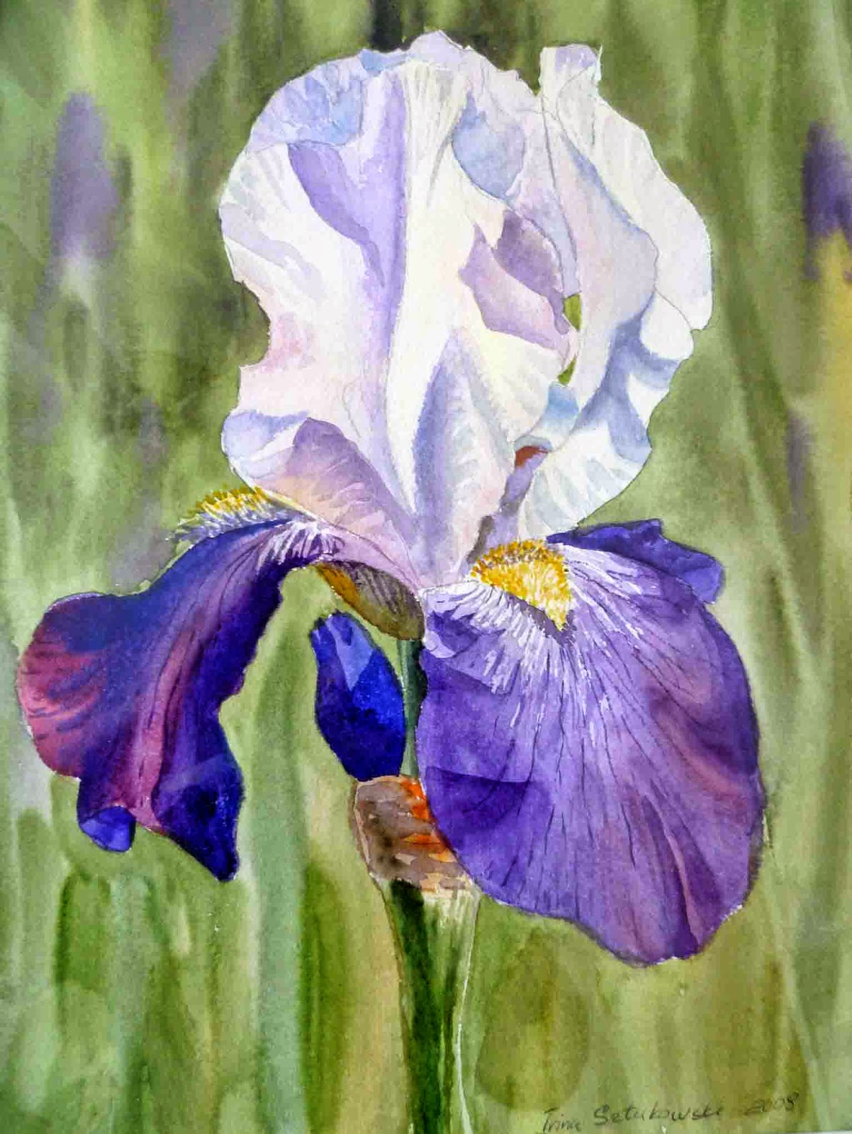 Artist illustrator irina sztukowski first iris flowers realism in watercolor realistic painting izmirmasajfo