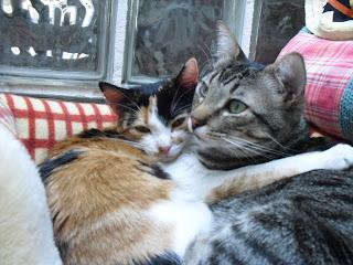 Los gatos y la p�rdida de un compa�ero