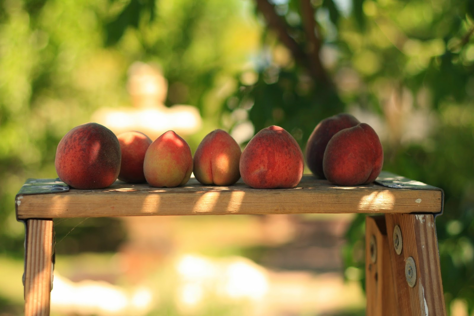 peach orchard The historic campground and the retreat facility are located on a beautifully wooded lot, in a place where life slows down long enough for you to refresh and restore.