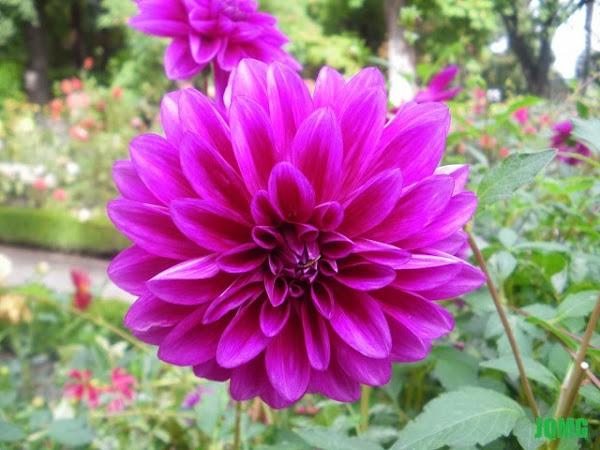 El jardin en octubre cuidar de tus plantas es for Jardin botanico madrid horario