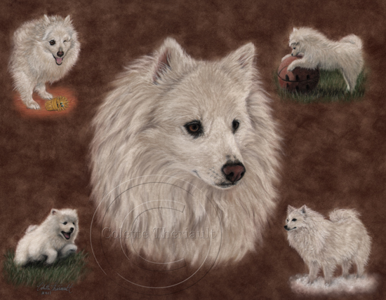 American Eskimo (Miniature) Dog Montage Portrait in Pastel