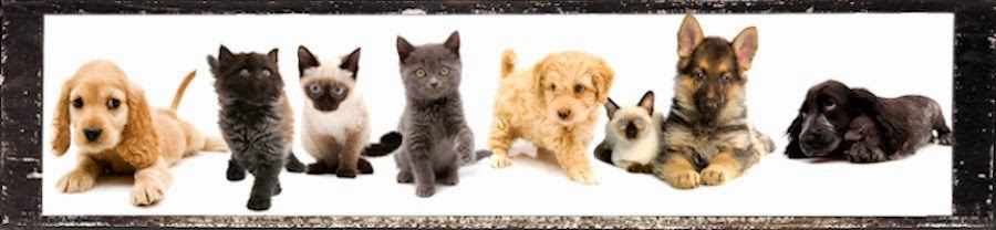 PAWS Lee County - News and Available Pets