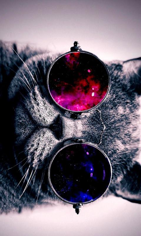 Cat Glasses Wallpaper Hd