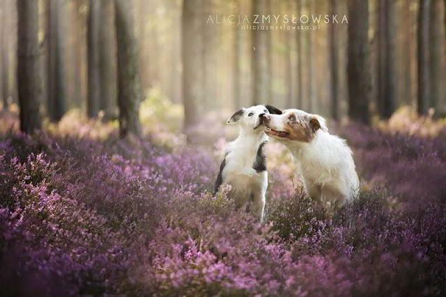 dog-photography-alicja-zmyslowska-17