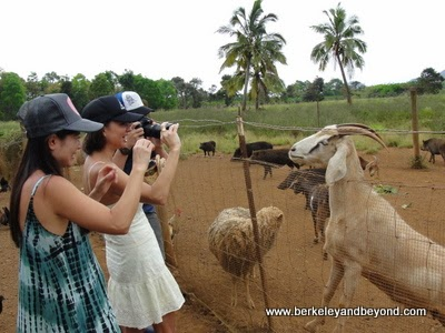 visitors photographing animals at Kilohana Plantation in Lihue, Kauai, Hawaii