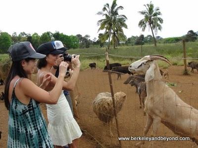 visitors photographing animals at Kilohana Plantation in Lihue, Kauai, Hawaii