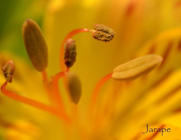 Al interior de la flor 2