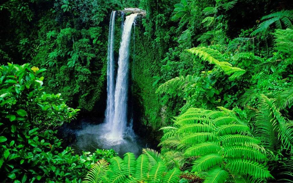 Mundo natural global importancia de las plantas for Importancia de las plantas ornamentales