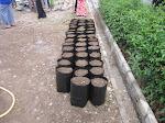 proyek pemanfaatan pekarangan