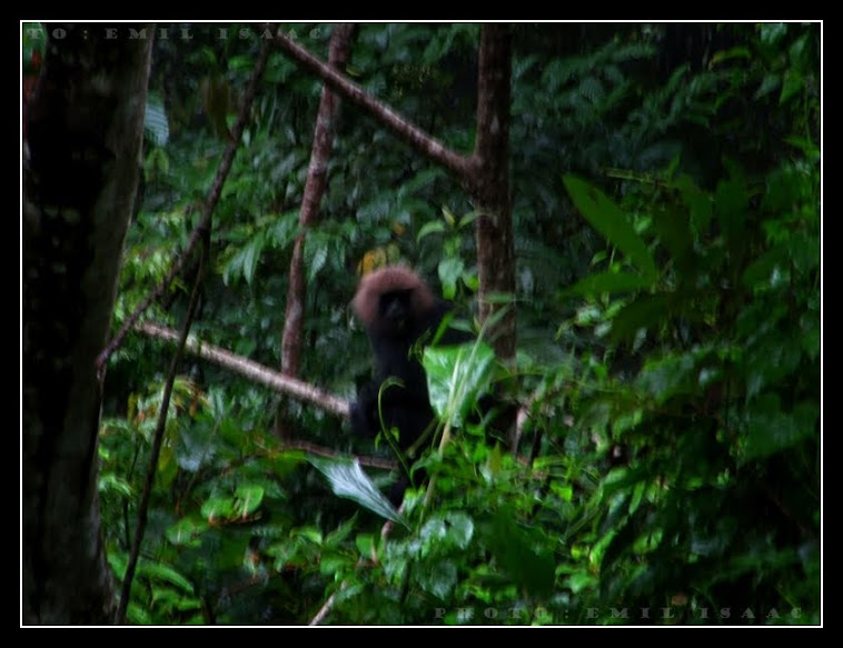 sholayar rain forest