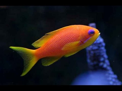 Joe 39 s aquaworld for exotic fishes mumbai india 9833898901 for Red saltwater fish