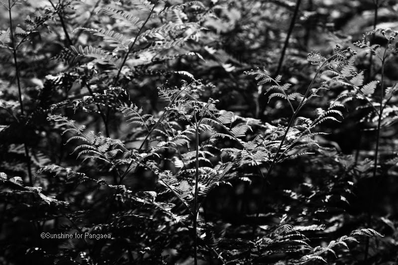 monochrome photography of fern