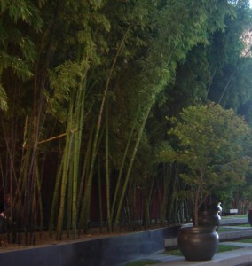 Bamboo Oasis2