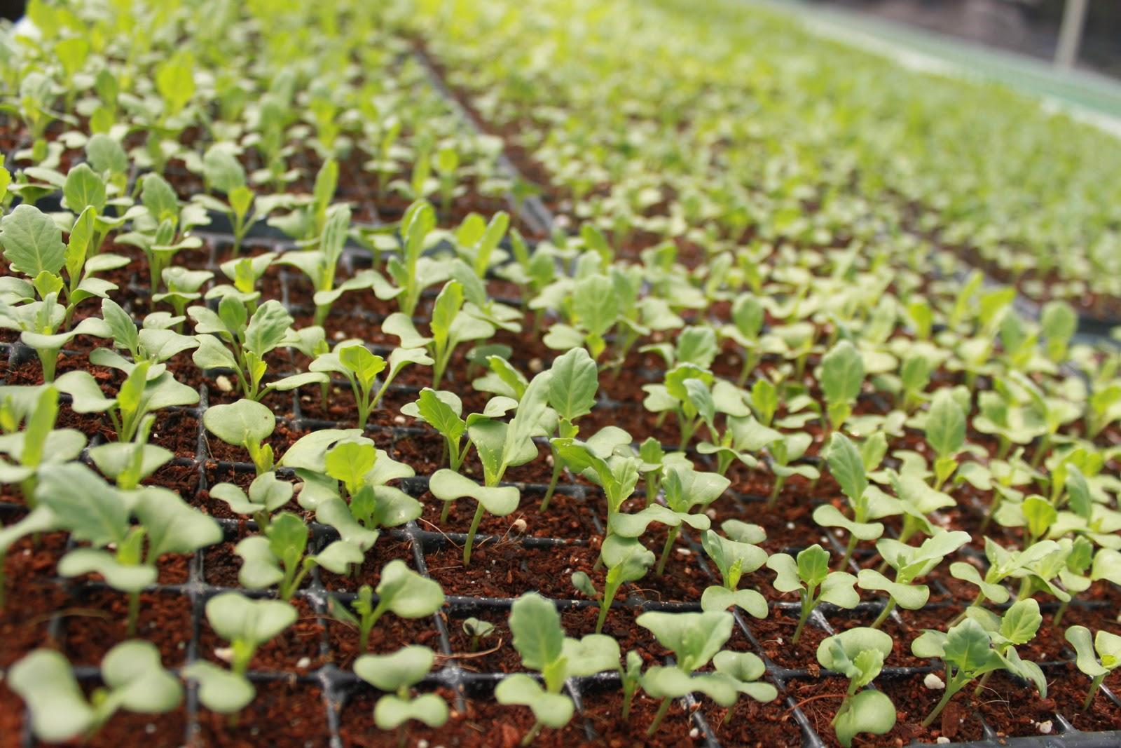 alcesarloquesdelcesar En Quíbor cosechan hortalizas y preservan el