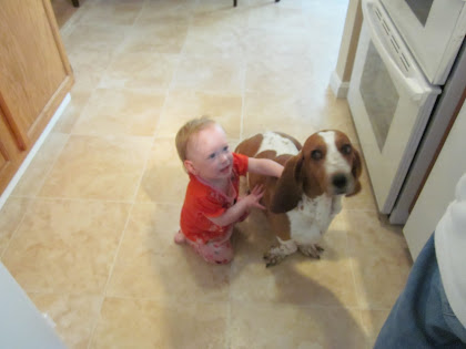 """""""Hold on tight Sis and I'll see if I can use my ears to fly us up to the counter for that cookie."""""""