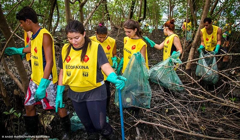 A preservação dos manguezais é de grande importância para a manutenção da qualidade da água e da biodiversidade marinha.