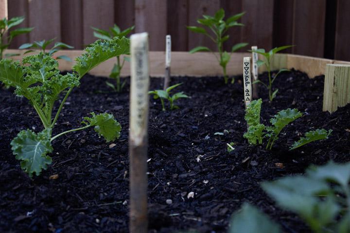 DIY Branch Garden Markers