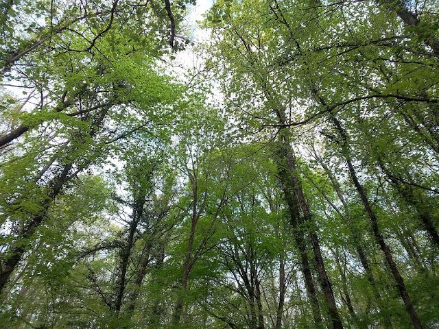 arbre foret ciel