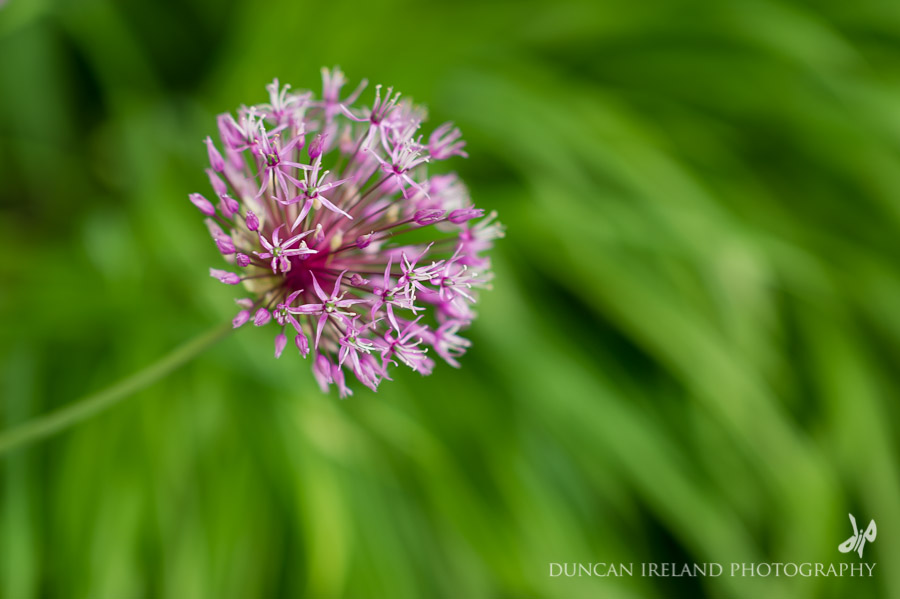Askham Hall Allium Wedding