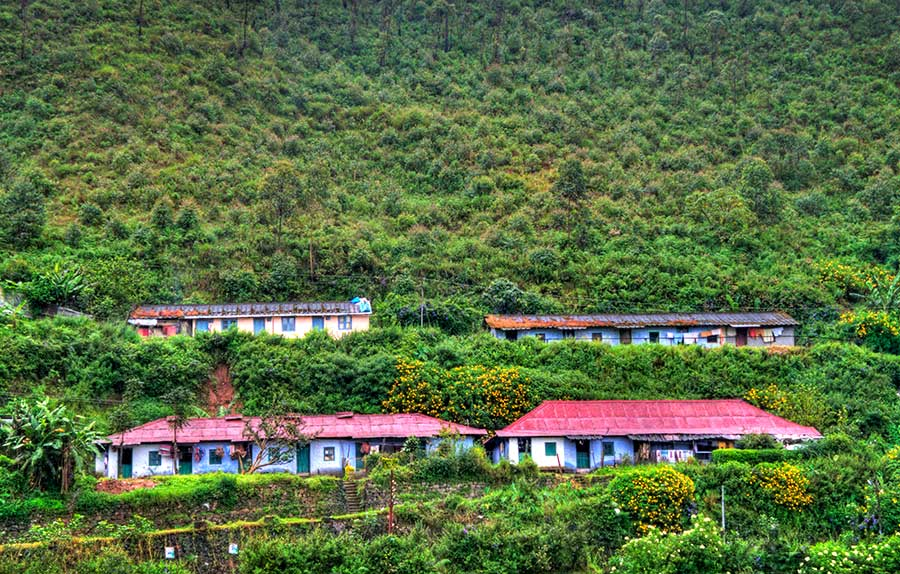 Munnar tea plantations and homes of tea workers