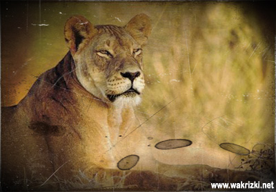 Cerita motivasi Singa dan Rusa Afrika