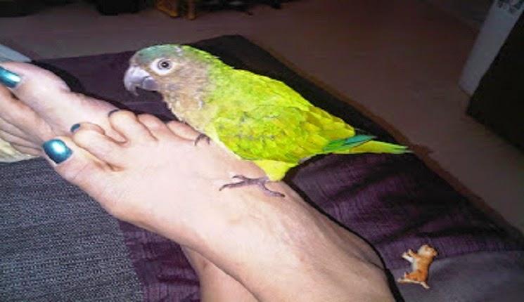 pepino quiere volar