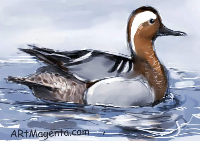 Garganey sketch painting. Bird art drawing by illustrator Artmagenta.
