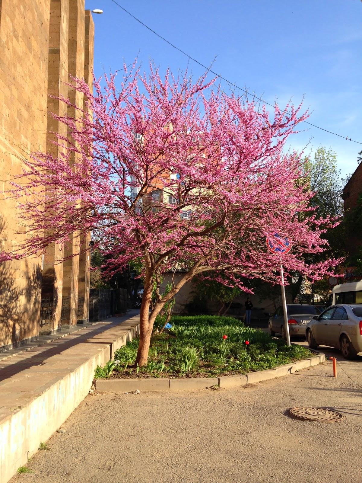 Цветут-деревья-Весной