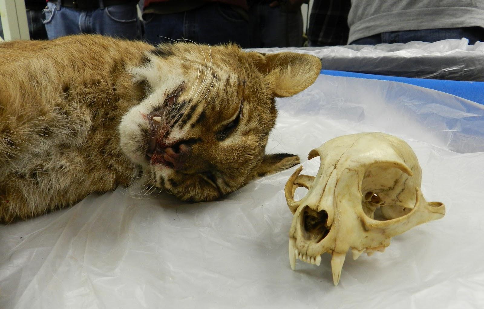 House cat anatomy 1172132 - follow4more.info