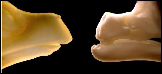 Tenemos ADN de dinosaurio en nuestros genes? La Polidactilia
