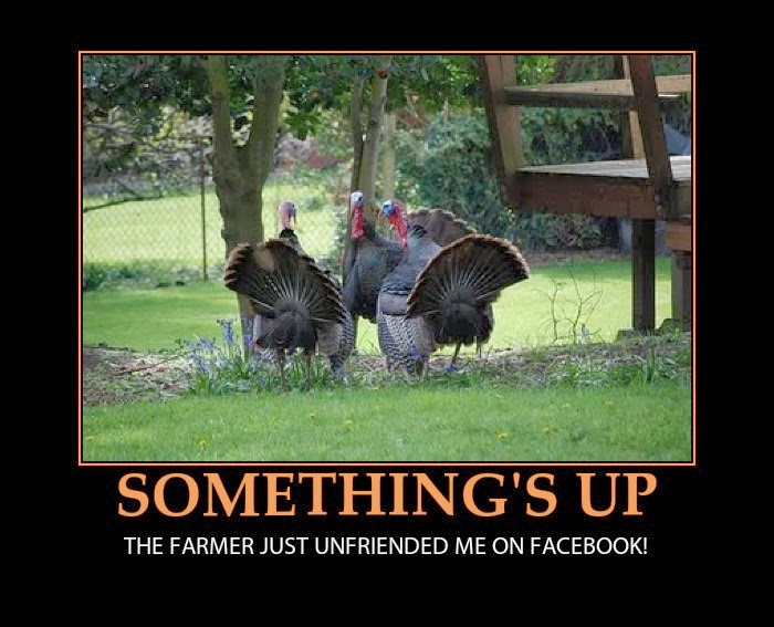 Funny Thanksgivingposter Turkeys And Facebook Jpeg
