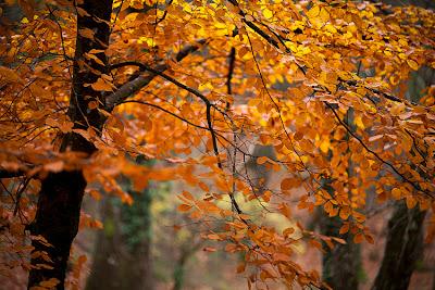 Outono na Mata da Albergaria, Serra do Gerês