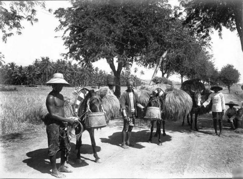 Rice Transport in Bali - Indonesia 1920s by Thilly Weissenborn
