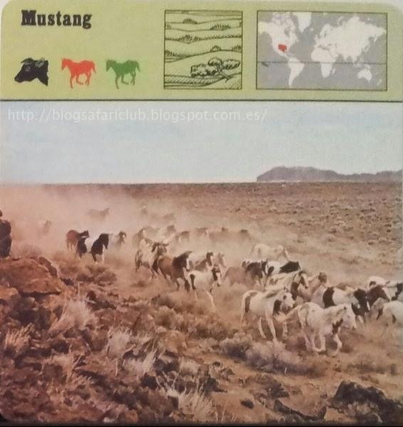 Blog Safari Club, el Mustang, el Caballo salvaje de América