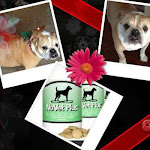 Visit Marie's ITCHY Dog page