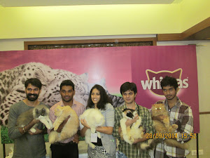 """All """"Winner Cats"""" & Owners posing for the """"Press Photographers""""."""