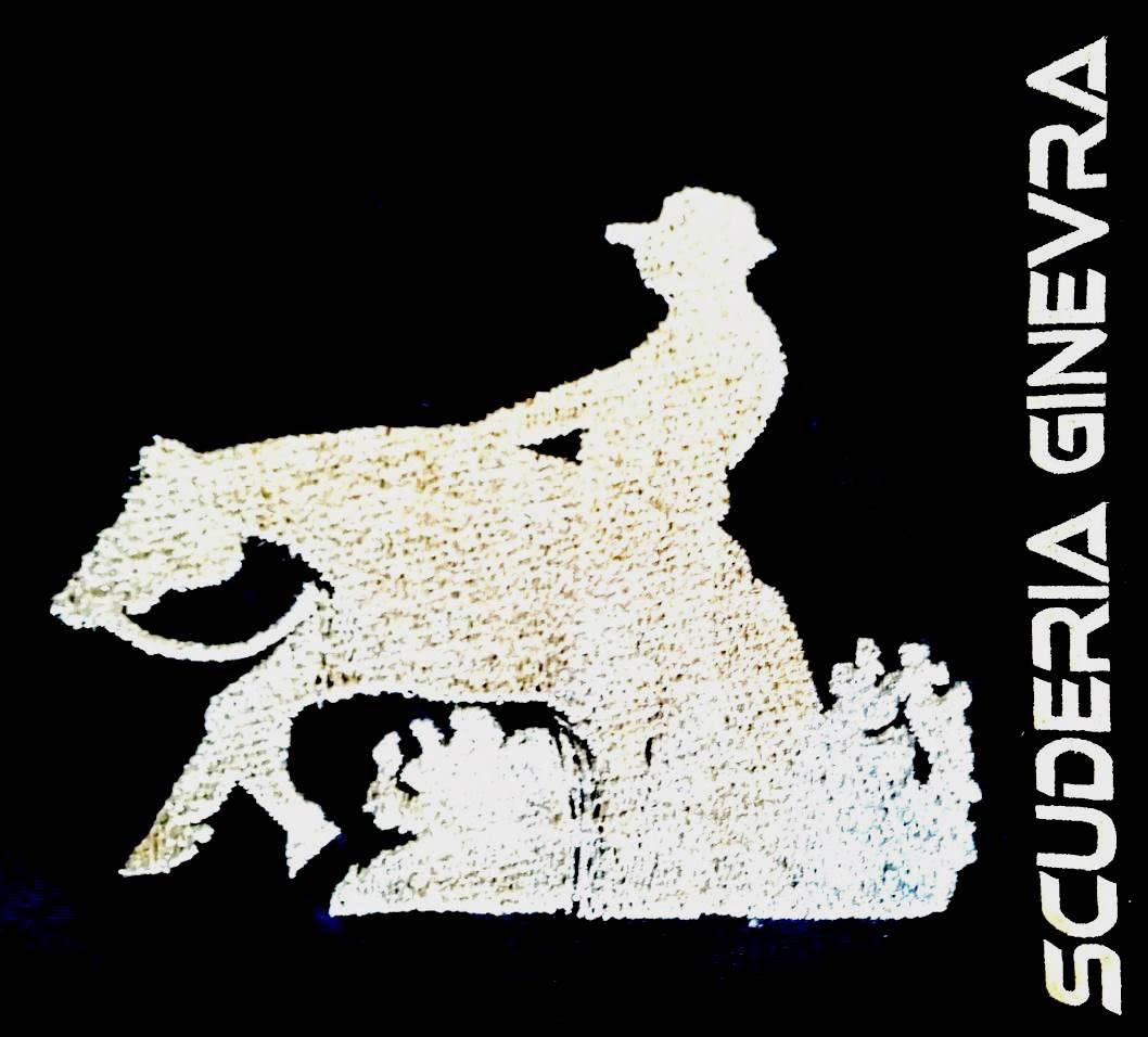 GINEVRA'S REINING TEAM 2018