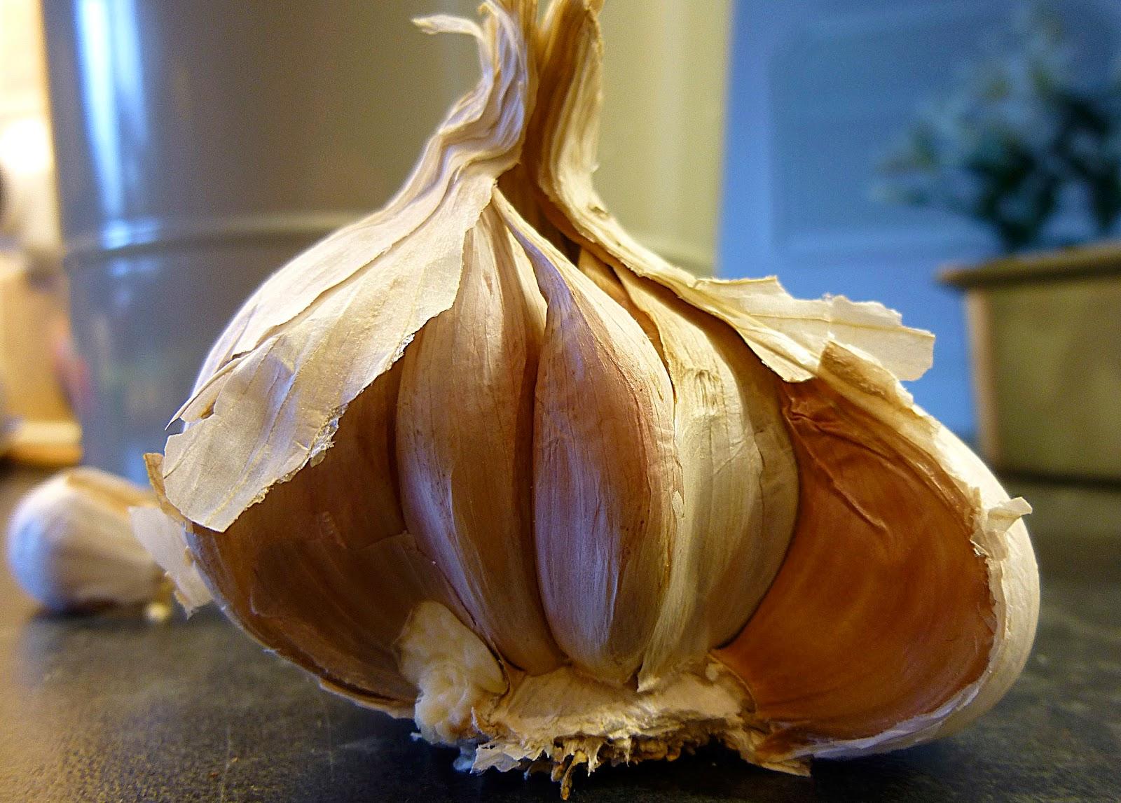 Garlic%2B095-365.JPG