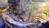 Tree on Adyanpara