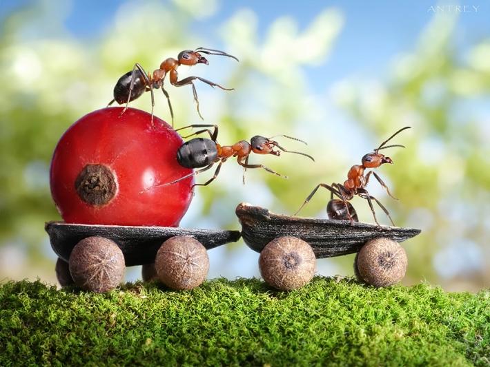 Imagem de Formigas