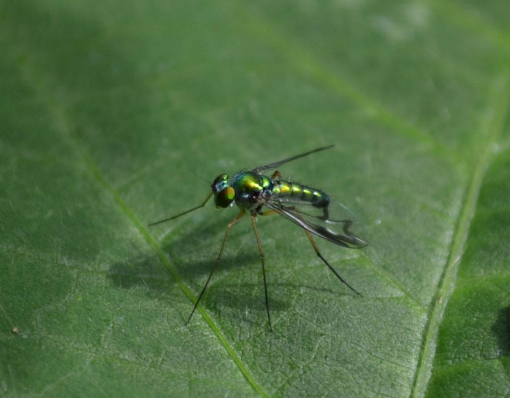 Woods Walks and Wildlife: More Garden Bugs