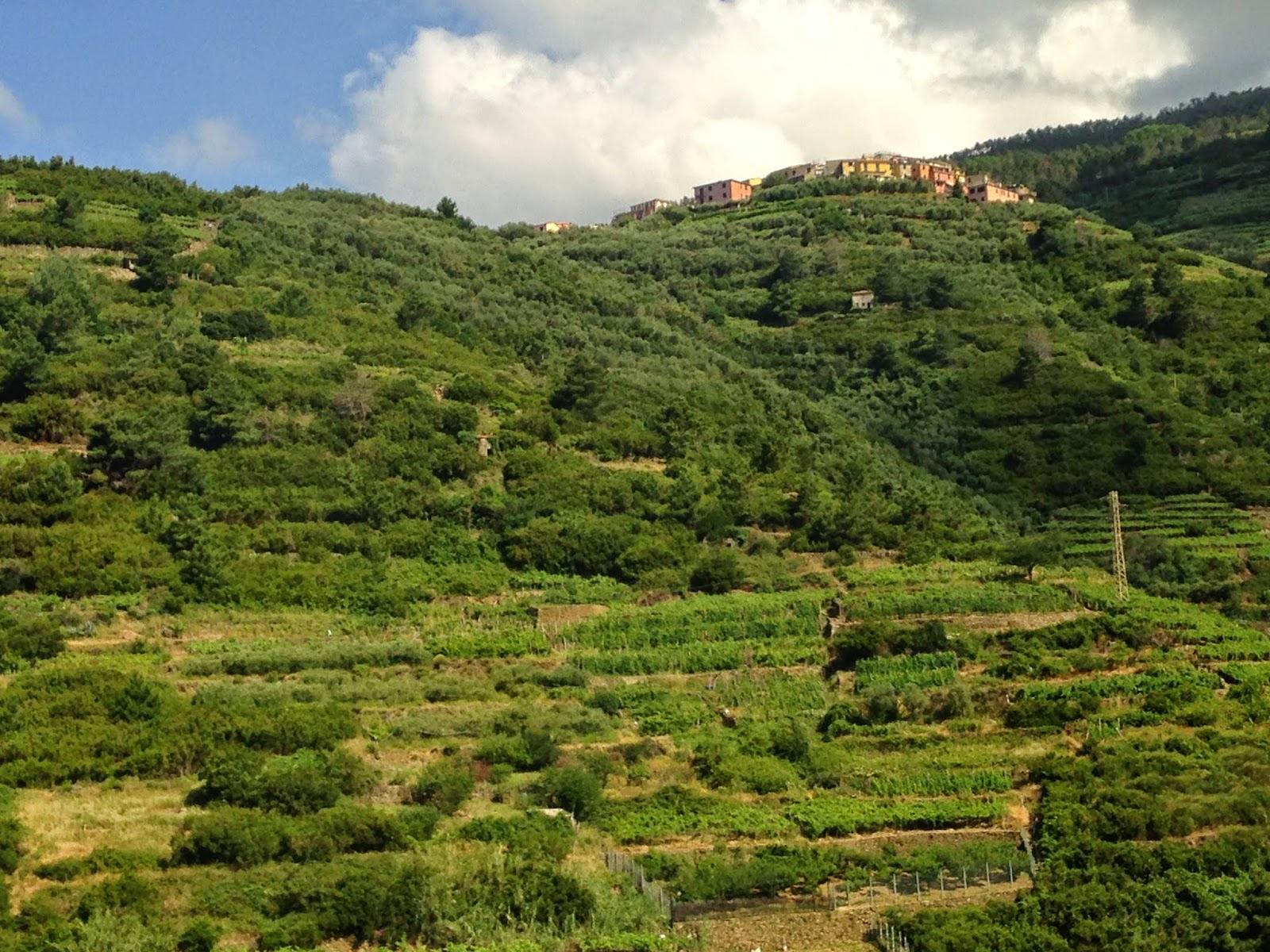 Cinque Terre terraced hills